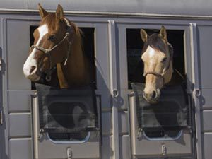 Learn common horse trailer terms